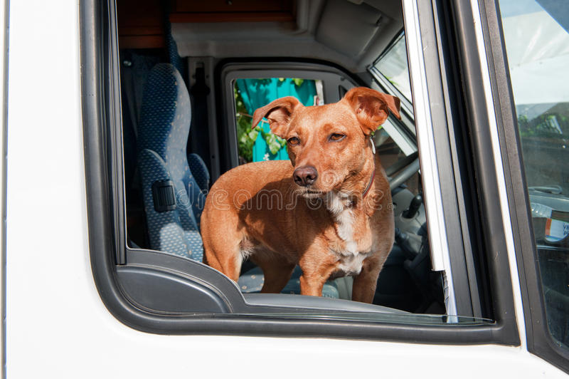 Download Dog in car stock photo. Image of brown, camper, window - 20486366