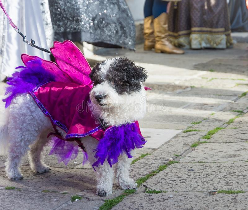Dog with Carneval costume. Beautiful dog royalty free stock images