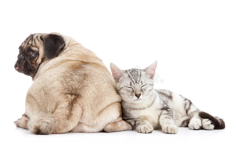 Dog and cat. Together on white background