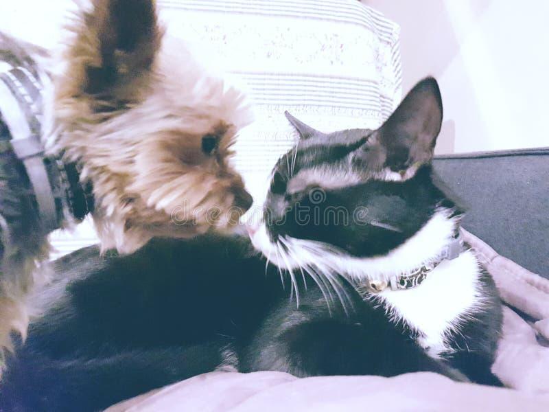 Dog&cat royalty-vrije stock foto's