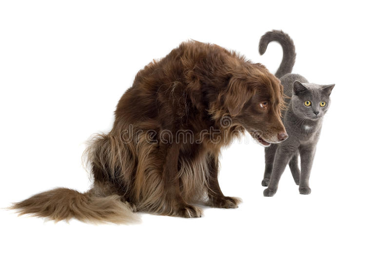 Dog and cat. Isolated on white stock photos