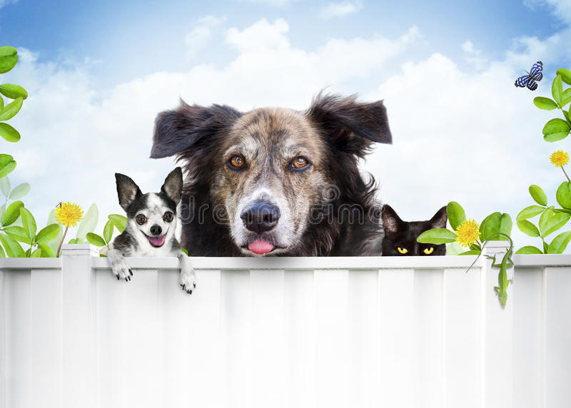 Dog and cat. A group of pets (two dogs and a cat) behind a with fence framed by leaves and flowers. Pet concept with text area