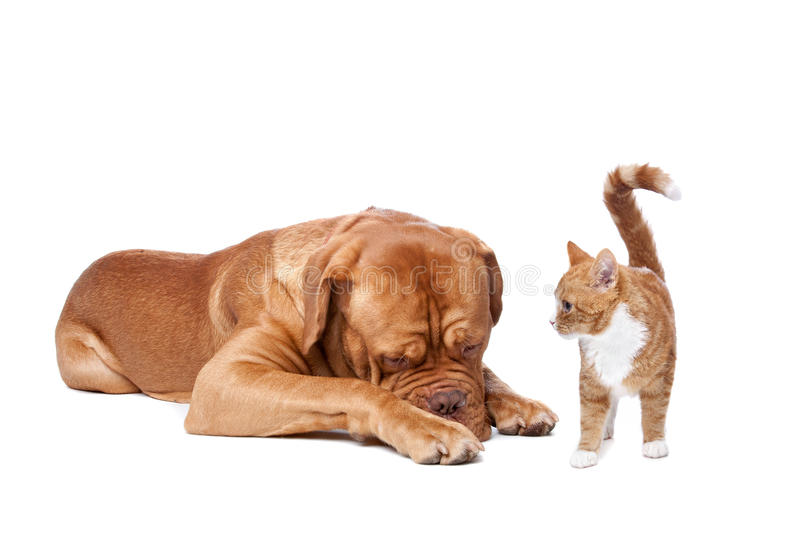 Dog and Cat stock photography
