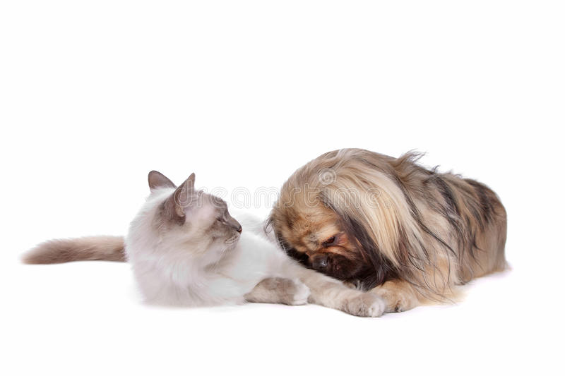 Download Dog and Cat stock photo. Image of pure, canine, feline - 22766882