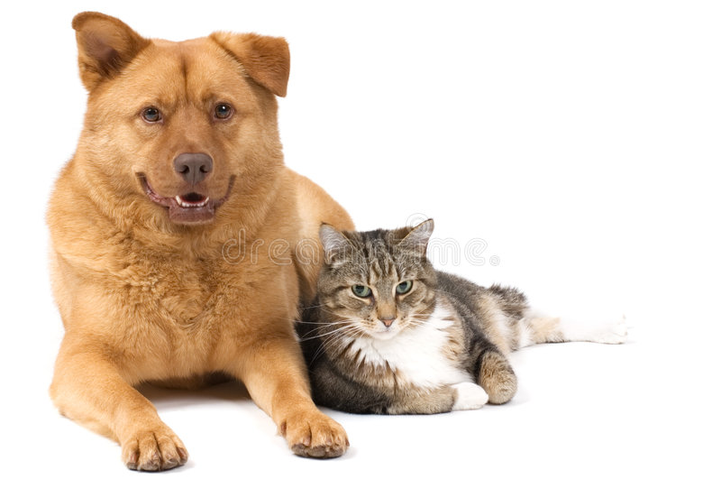 Dog and Cat. Posing for the camera (white background
