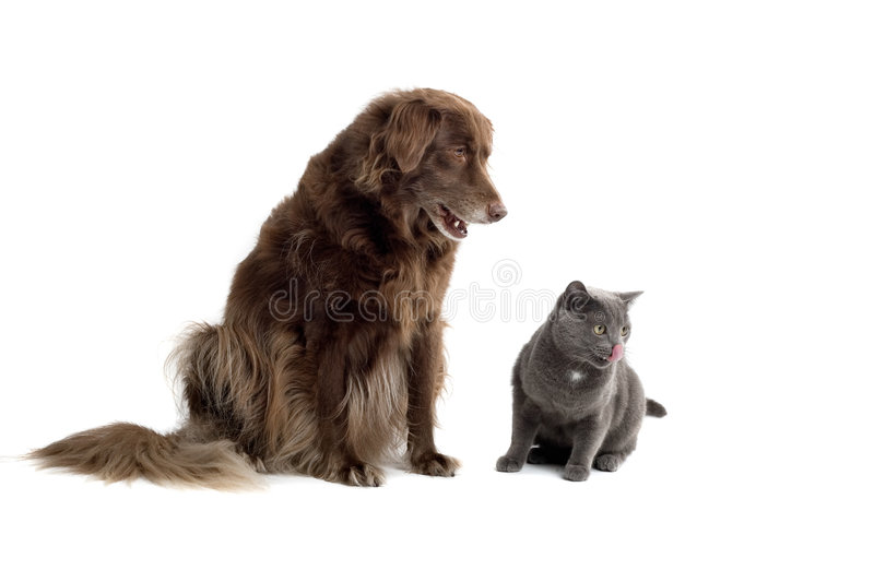 Dog and cat. A dog and cat sit side by side, snarling at a common target stock photo