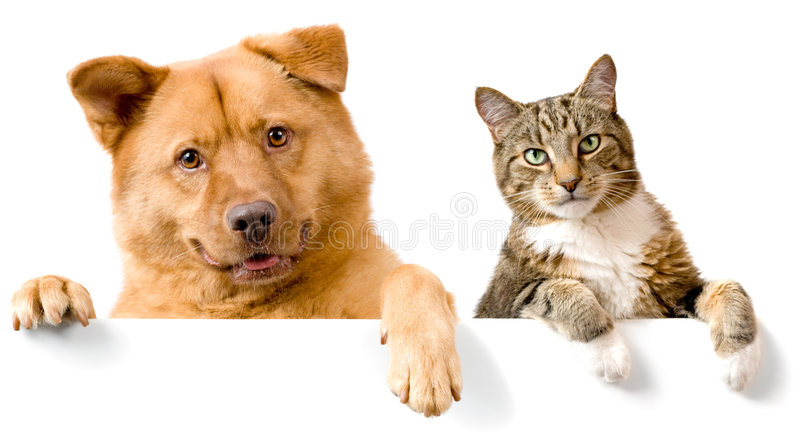 Dog and Cat above white banner. Looking at camera
