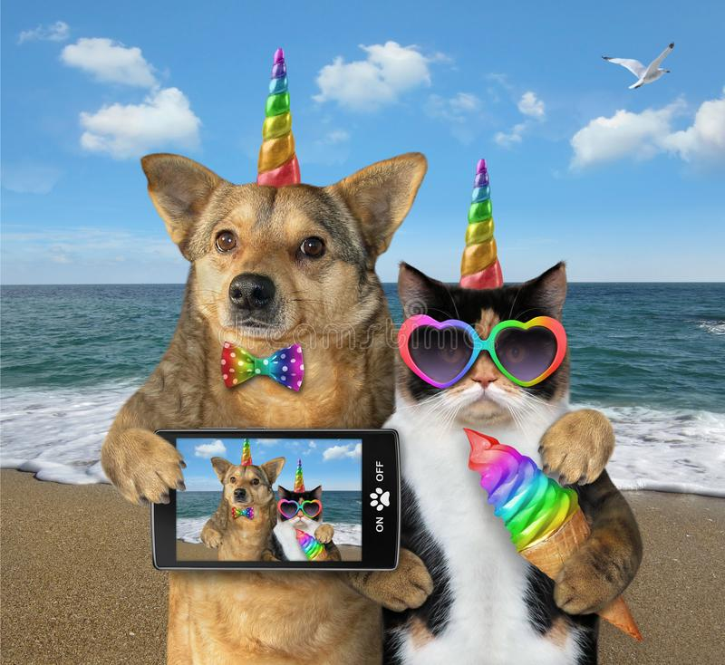 Dog with a cat on the beach together stock photography