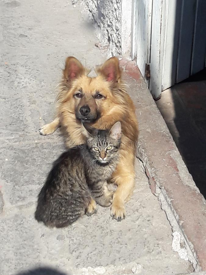Dog and cat best friends cuddling in the sun stock photo