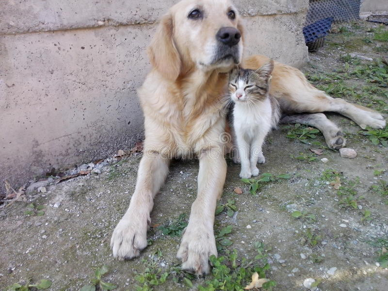 dog and cat best friends stock photos
