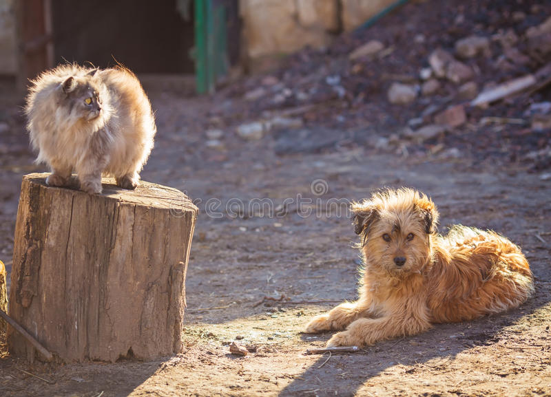 Dog and cat best friends playing together outdoor. stock images
