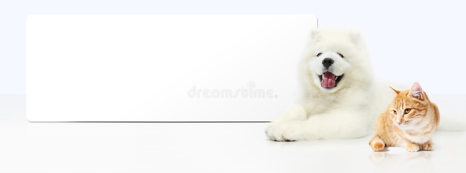 Dog and Cat with blank banner isolated on white background. Panoramic view stock photos