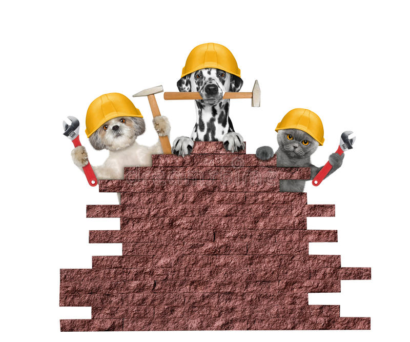 Dog and cat builders holding tools in their paws royalty free stock photography