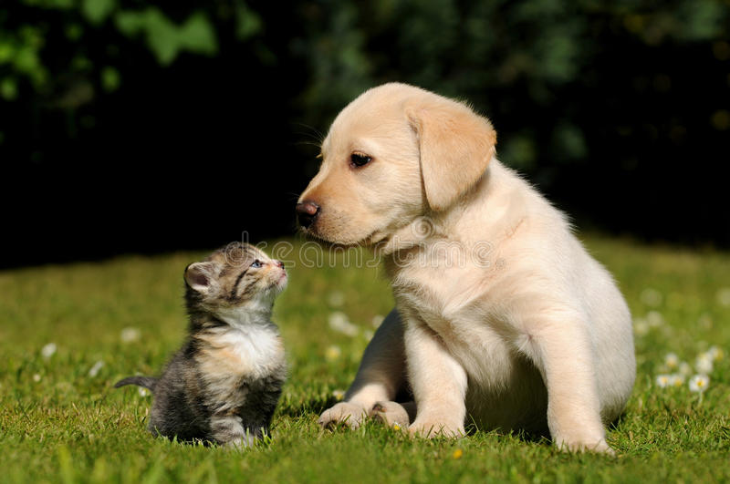 Dog and cat. Cats and dogs live in harmony