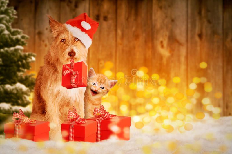 Dog and cat at Christmas with gifts stock image