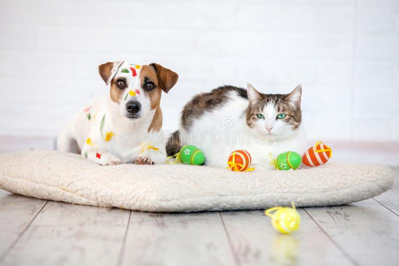 245 Dog Cat Easter Photos Free Royalty Free Stock Photos From Dreamstime