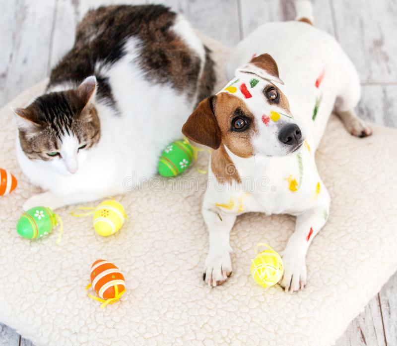 Dog and cat with easter eggs. Pets at home stock image