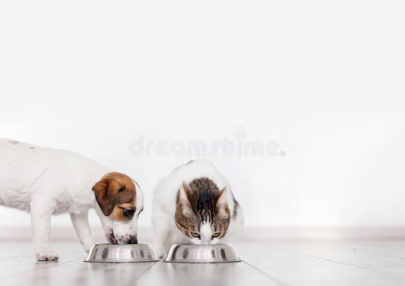 Dog and cat eating food stock photography