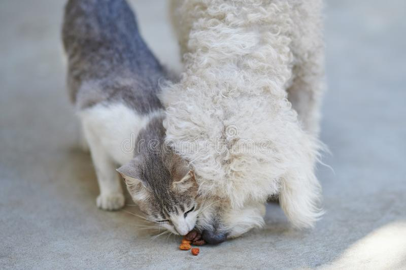 Dog and cat fight for food stock image