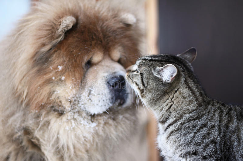 Dog and cat. On friendly communicate