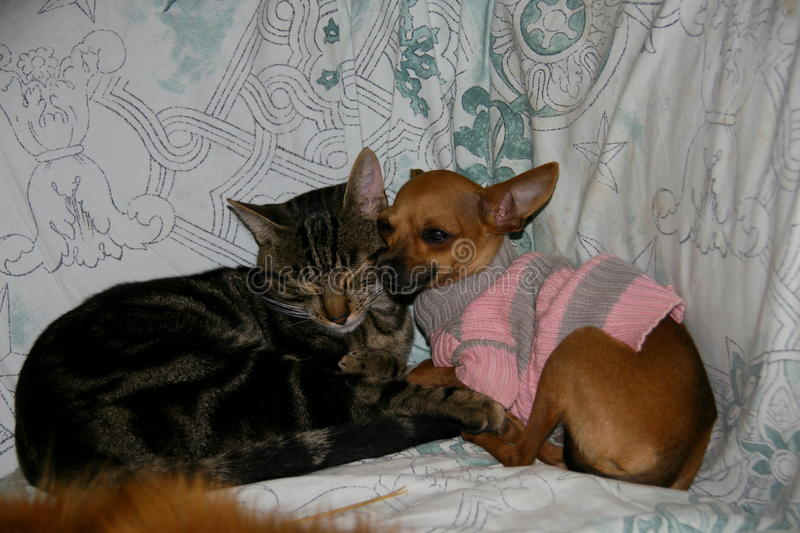 dog and cat friends stock photo