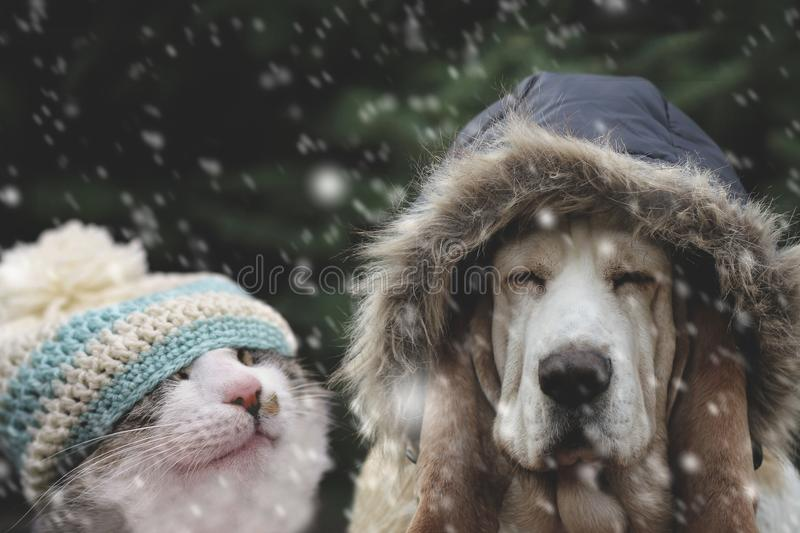 Dog and cat hat in snowfall royalty free stock image
