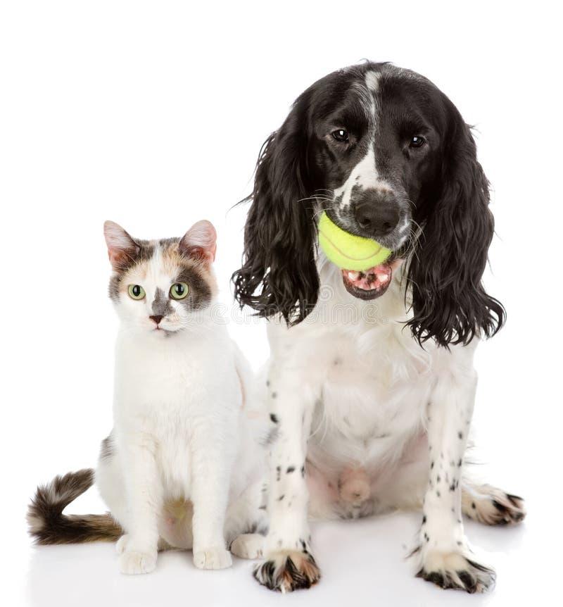 Dog and cat. looking at camera royalty free stock images