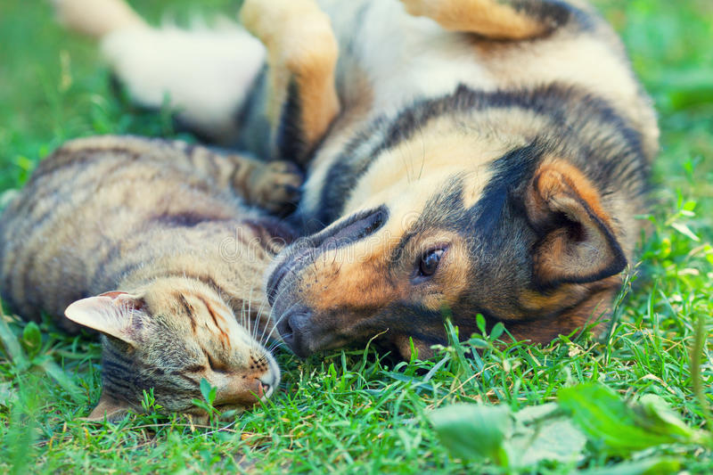Dog and cat. Lying together on the grass