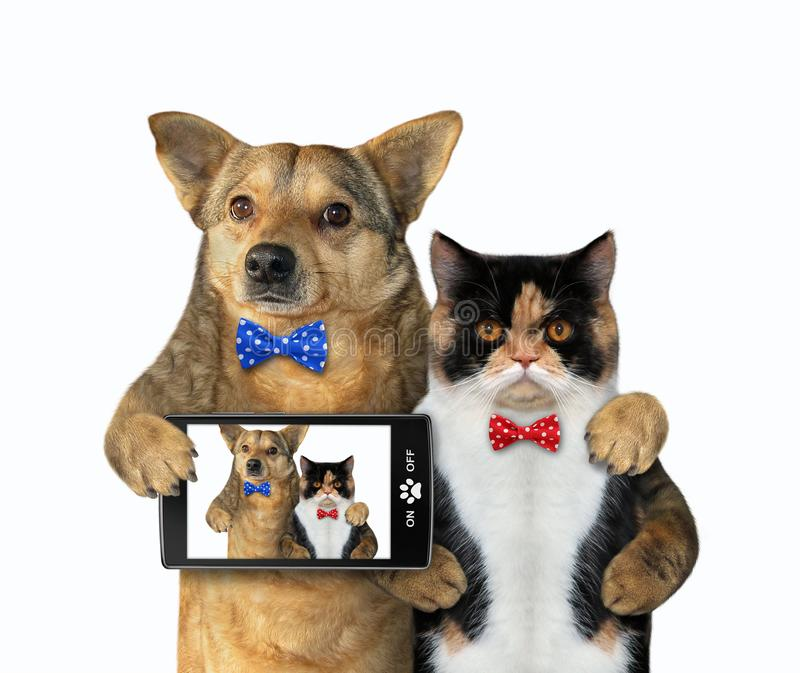 Dog with a cat made selfie royalty free stock image