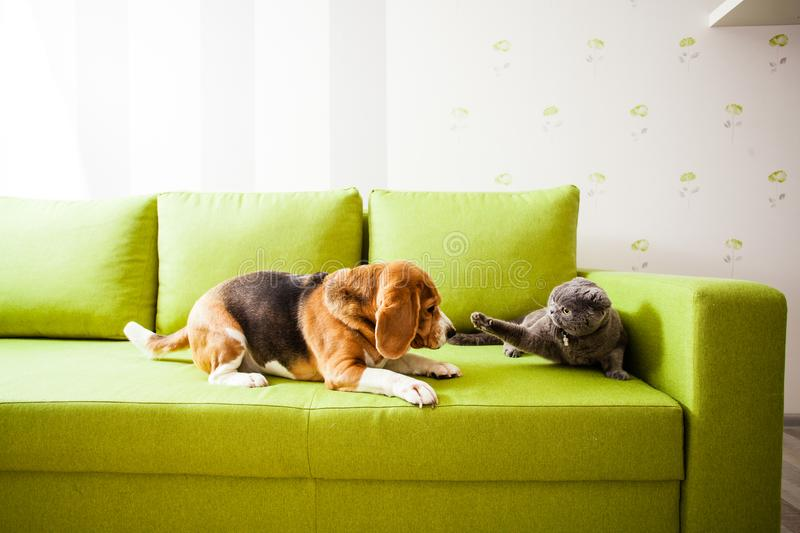 The dog and the cat are playing stock images