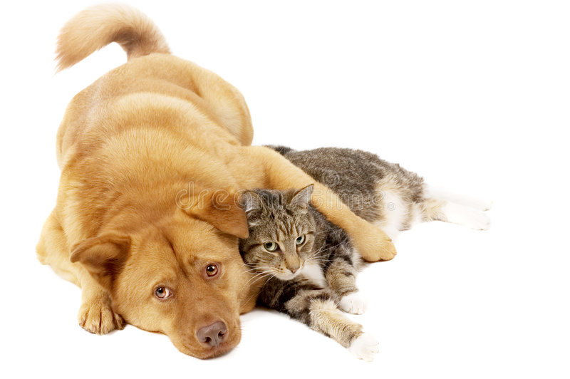 Dog and Cat Relaxing. On white background