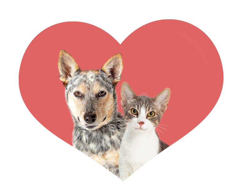 Dog and Cat Samen in Valentine Heart Shape royalty-vrije stock foto's