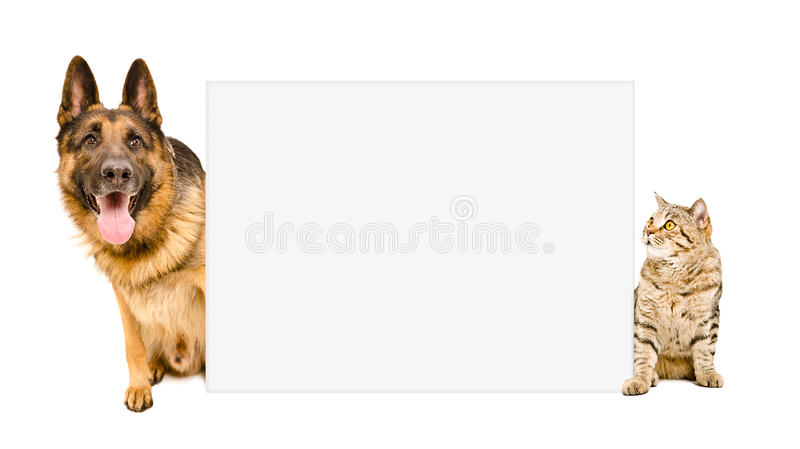 Dog and cat sitting behind poster royalty free stock images