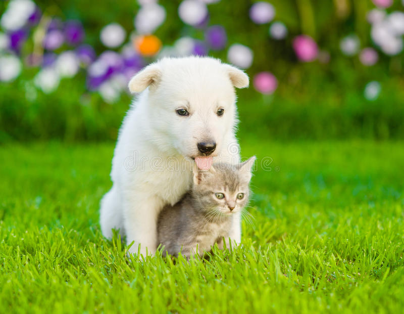Dog with cat sitting together on green grass stock photography