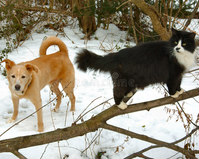 Dog and Cat in the Snow royalty free stock photos