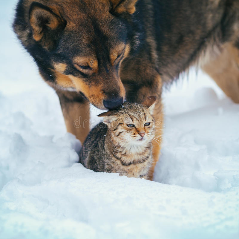 Dog and cat in the snow. Cute scene. Dog taking care of the cat in the snow royalty free stock images