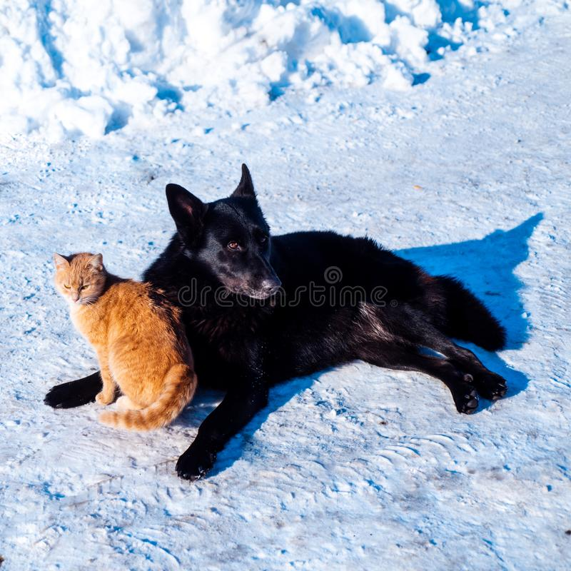 Dog and cat in the snow. Winter. Friends animals. Frost and cold. Dog and cat in the snow. Winter. Friends animals. Frost and cold stock photos