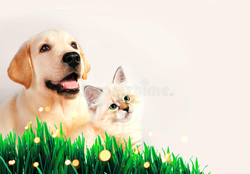 Dog and cat together on grass, spring concept. Dog and cat together on grass, spring concept stock photo