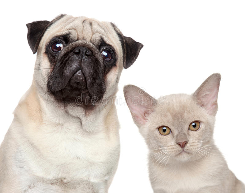 Dog and Cat. Together on a white background