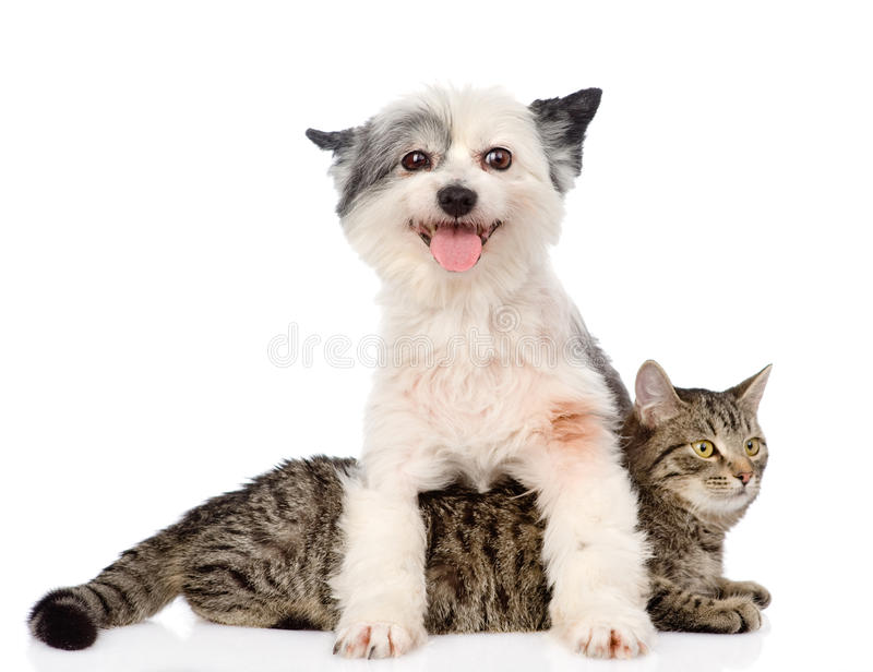 Dog and cat together. on white background.  stock images