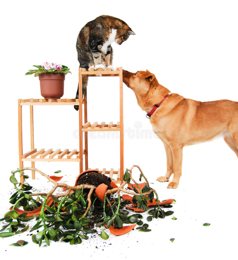 Download Dog and Cat troublemakers stock photo. Image of plant - 4348660