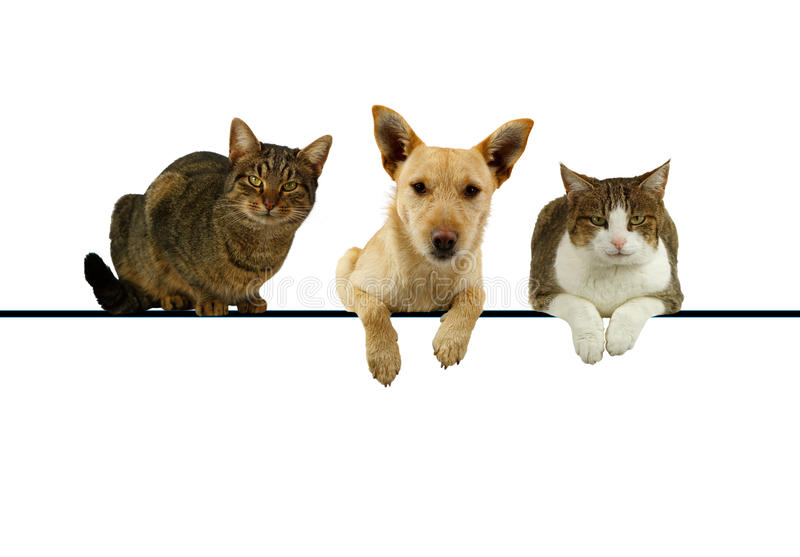 Dog and cats over a blank banner royalty free stock image