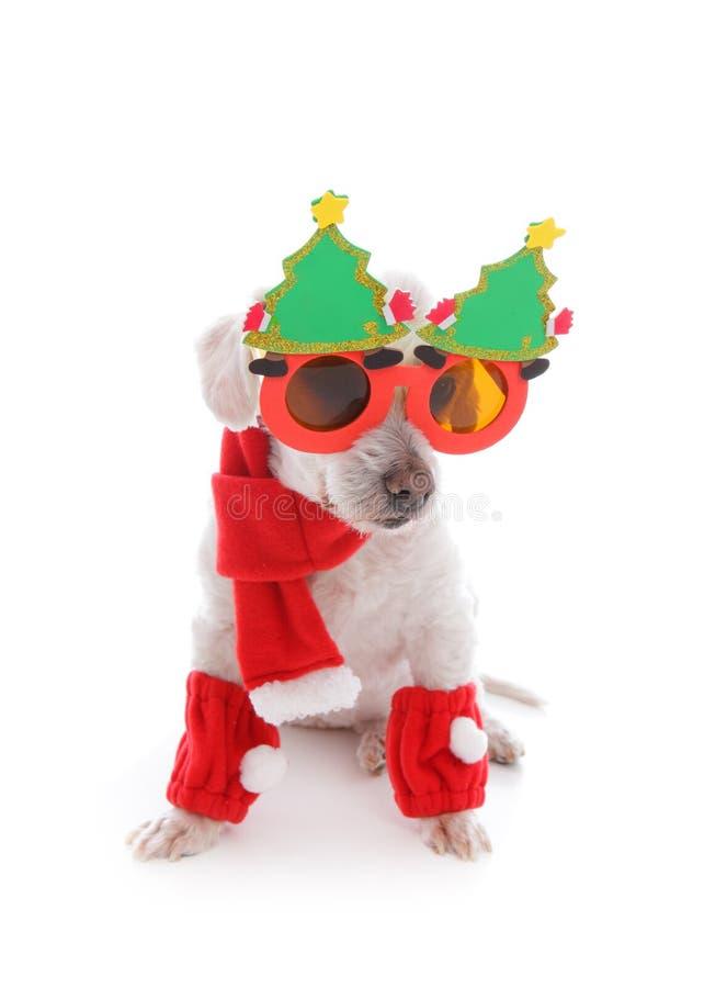 Dog celebrates Christmas stock images