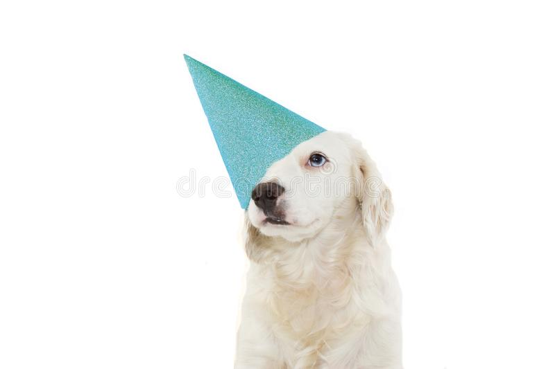 DOG CELEBRATING A BIRTHDAY, CARNIVAL, MARDI GRAS OR NEW YEAR PARTY WITH A BLUE GLITTER HAT. ISOLATED AGAINST WHITE BACKGROUND.  stock photos