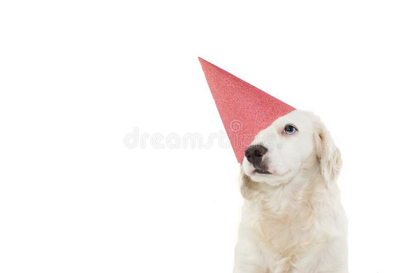 DOG  CELEBRATING A BIRTHDAY, CARNIVAL, MARDI GRAS OR NEW YEAR PARTY WITH A CORAL  GLITTER HAT. ISOLATED AGAINST WHITE BACKGROUND. DOG CELEBRATING A BIRTHDAY stock images
