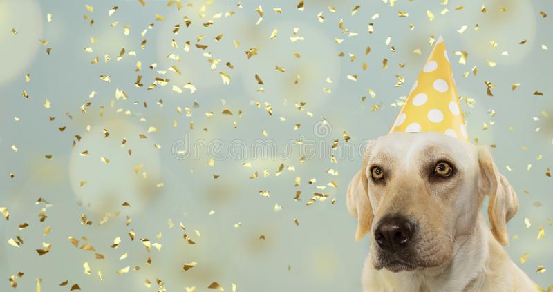 DOG CELEBRATING A BIRTHDAY PARTY, WEARING A YELLOW POLKA DOT HAT. ISOLATED AGAINST PASTEL BLUE BACKGROUND WITH CONFETTI FALLING.  royalty free stock image