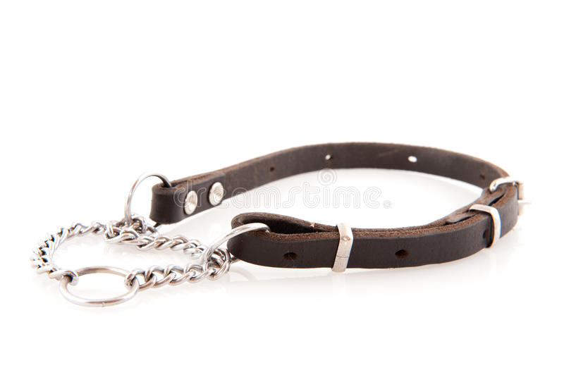 Dog chain stock photography