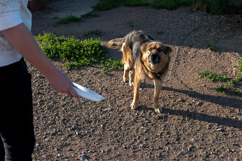 Dog on the chain. The dog protects the house. feed the evil dog.  royalty free stock photography
