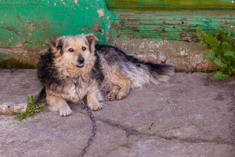 Dog on the chain near the house. Dog on the chain is liying near the owners house stock photos