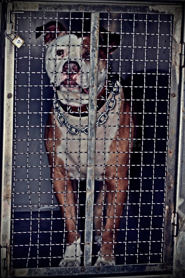Dog in chain. Dog during a shep travel, inside his room dedicated stock photo